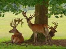 Park-life, Woburn Abbey