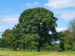 Summer-in-the-Misbourne-Valley