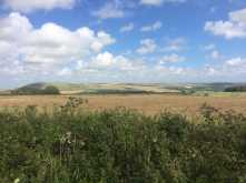 Summer-on-The-South-Downs-near-Telscombe