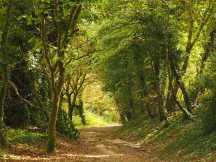Friston Forest