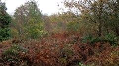 Autumn-colours,-Abbeyford-Woods
