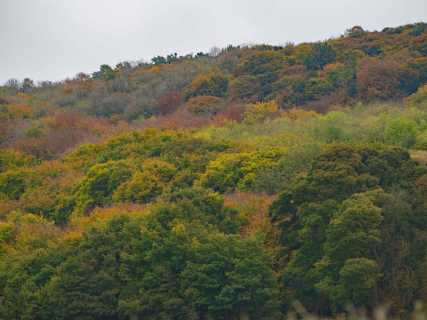 Autumn-on-the-Chiltern-Hills
