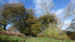 Blue-skies-and-Autumn-on-Exmoor