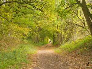 Greenway,-Wheathampstead-to-Ayot-St-Peter