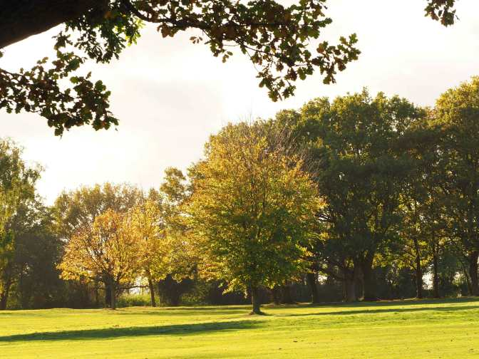Mid-Herts-Golf-Course,-Autumn-colours