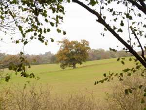 Robinson's-Wood,-Wheathampstead