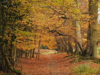 Autumn-paths-on-Ashridge