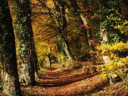 Autumn-Sun,-Routs-Green,-Buckinghamshire