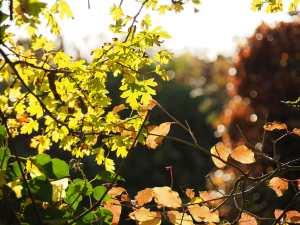 Leaf-filter