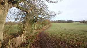 Homefield-Spring,-Bovingdon