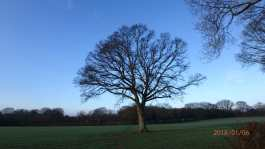 January-in-The-Chilterns