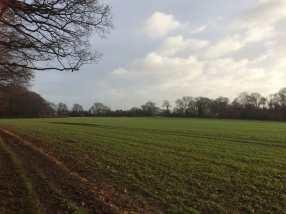 Rainhill-Dell,-Bovingdon