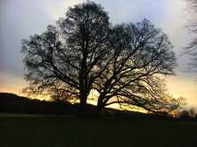 Early-morning-winter-light-in-the-Missbourne-Valley