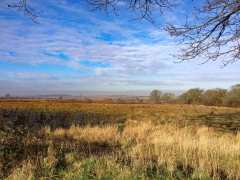 Heartwood-Forest,-Sandridge