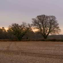Hertfordshire-early-morning-light