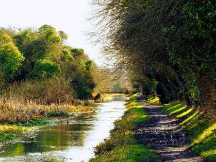 Spring-Colours,-Wendover-Canal