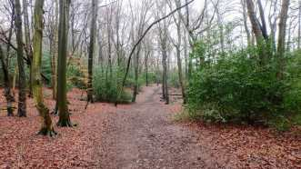 Bray's Wood, Hyde Heath