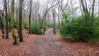 Bray's Wood, Hyde Heath