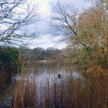 Beaulieu River through the trees