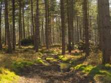 Kildridge Wood, Stonor