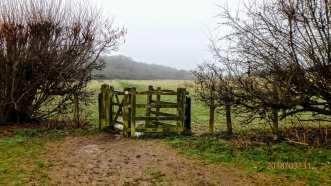 Misty morning walk, Chesham