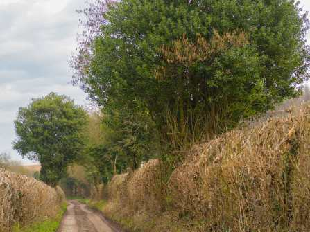 Chiltern hedgerows