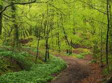 Crowell Wood in Spring, Buckinghamshire