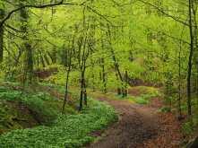 Crowell Wood in Spring, Buckinghamshire