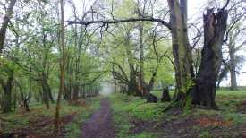 Ivinghoe Woods