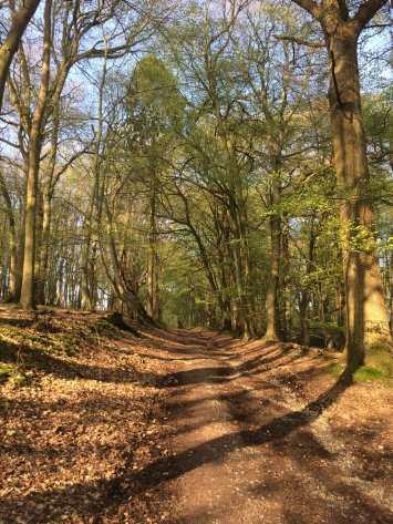 Kitesgrove Wood, Maidensgrove, Buckinghamshire