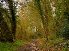 Muddy paths, Chesham