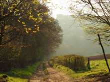Spring morning haze, Buckinghamshire