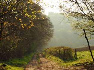 Spring morning haze, Buckinghamshire