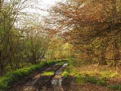 Spring morning tracks, Chilterns
