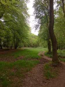 Berkhamsted Common