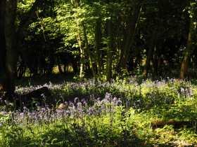 End of the season, Fugsdon Wood