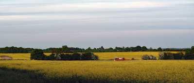 Evening farming