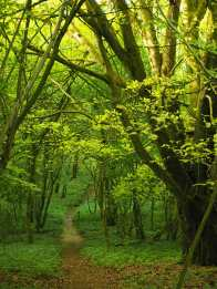 Growcroft Copse, Ashampstead, Berkshire
