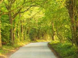 Hertfordshire lanes