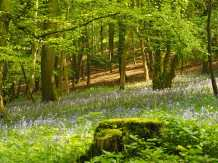 Idlecombe Wood, Turville Heath