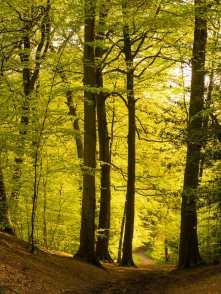 Lees Wood, Chandler's Cross, Hertfordshire