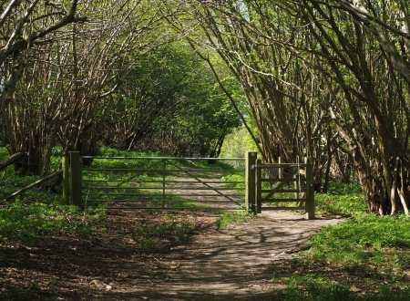 Spring on Pyrton Hill