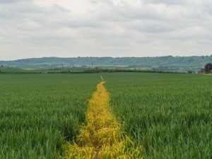 The path to Dunstable Downs