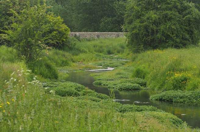 Watercress, The River Gade, Great Gaddesden
