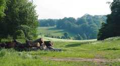White Hill near Stubbles, Berks