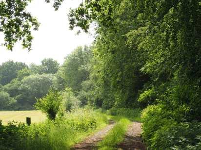 Angel's Wood, Great Offley, Hertfordshire