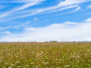 Blue skies and wild flower meadows