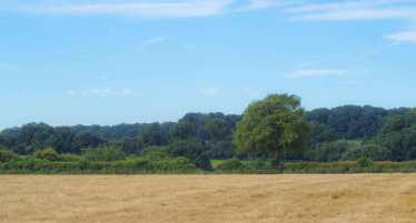 Fields near Studham, Hertfordshire