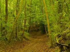 Hollow Way, Bisham Woods