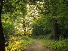 Bayhurst Woods